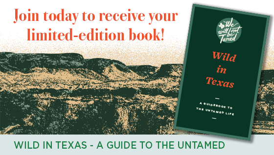 Story #2: Wild in Texas - A Guide to the Untamed Life