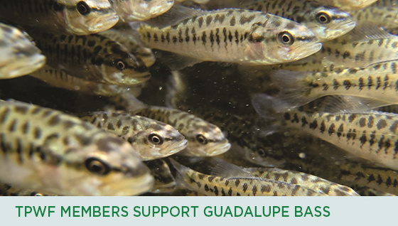 Story #2: TPWF Members Support Guadalupe Bass