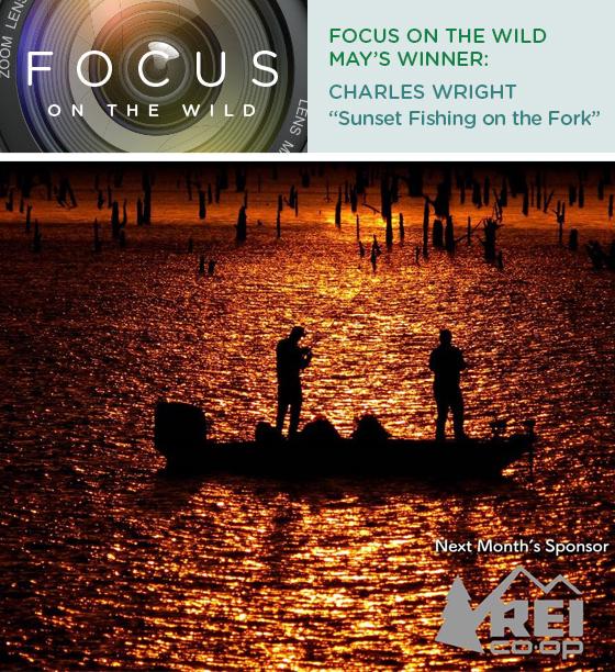 Focus on the Wild June Winner: Charles Wright