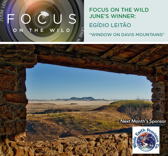 Focus on the Wild June Winner: Egídio Leitão