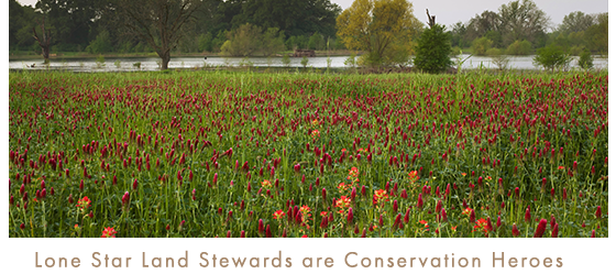 Lone Star Land Stewards are Conservation Heroes