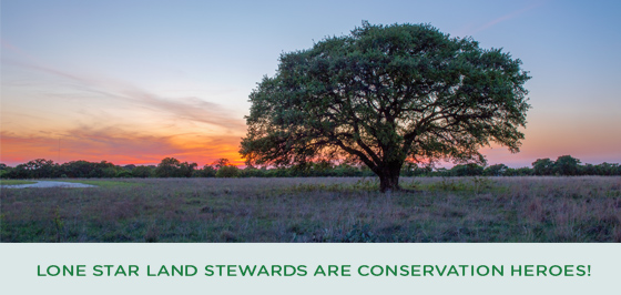 Lone Star Land Stewards are Conservation Heroes!