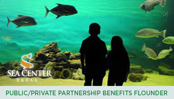 Story #2: Public/Private Partnership Benefits Southern Flounder