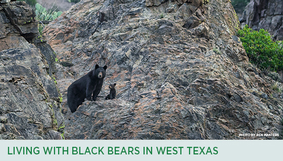 Story #3: Living with Black Bears in West Texas