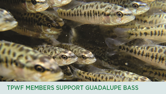 Story #4: TPWF Members Support Guadalupe Bass
