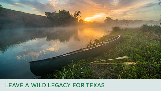 Story #4: Leave a Wild Legacy for Texas