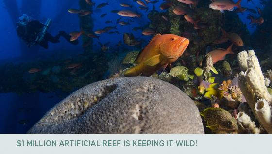 $1 Million Artificial Reef is Keeping it Wild!