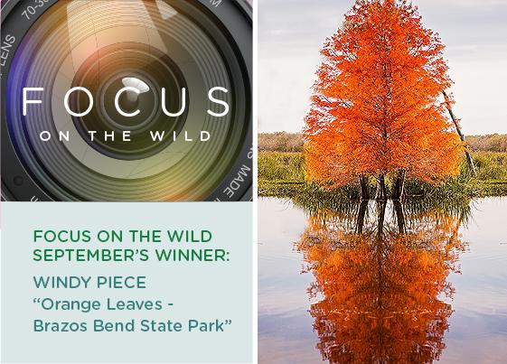 Focus on the Wild: September Winner