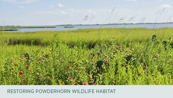 Restoring Powderhorn wildlife habitat