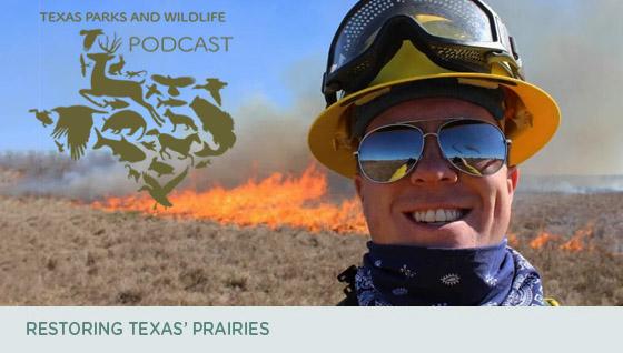 Restoring Texas' praries