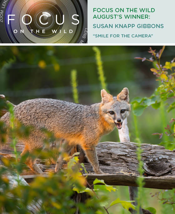 Focus on the Wild- Susan Knapp Gibbons