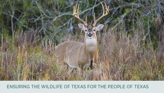 Ensuring the Wildlife of Texas for the People of Texas